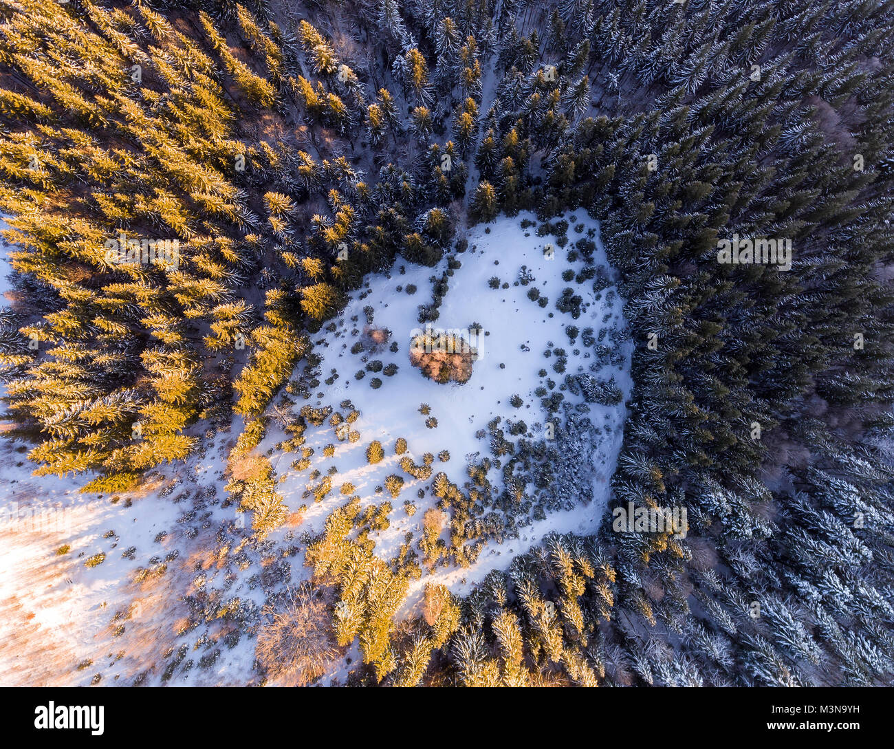 Aerial View Of Winter Forest Covered In Snow Drone Photography