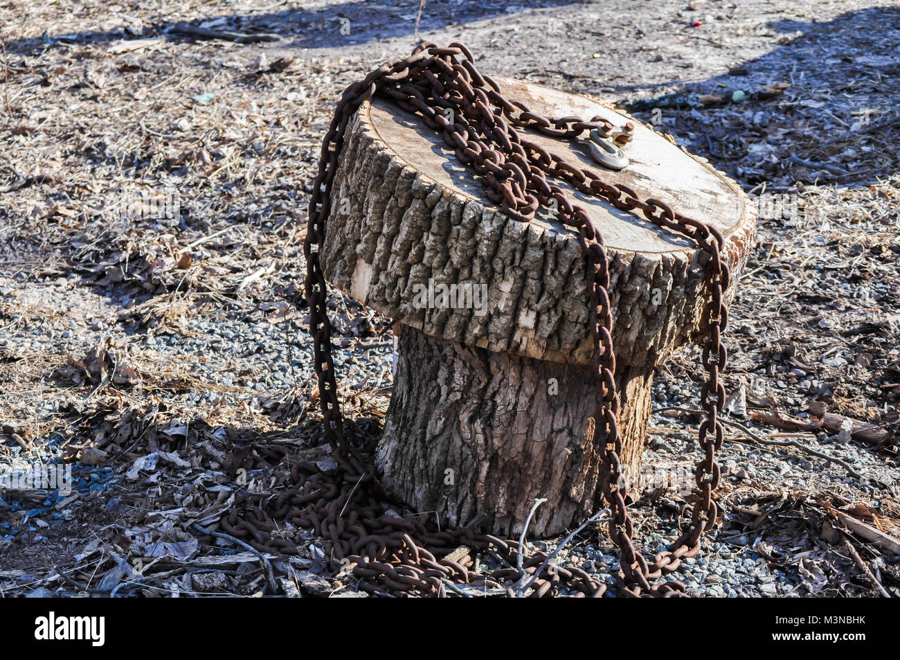 Rusted Heavy Chain On A Tree Stump Chair In The Woods   Stock Image