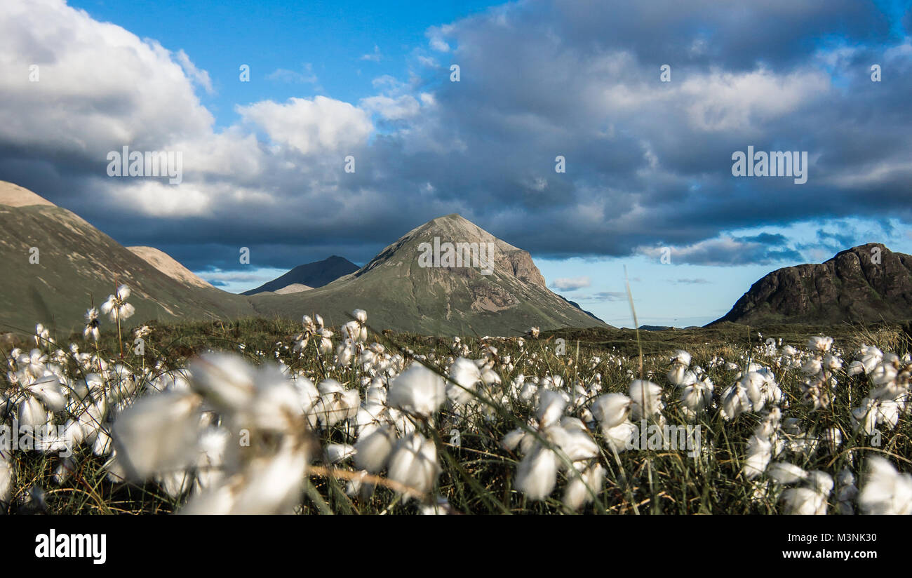 Marsco and Bog Cotton in Summer - Stock Image