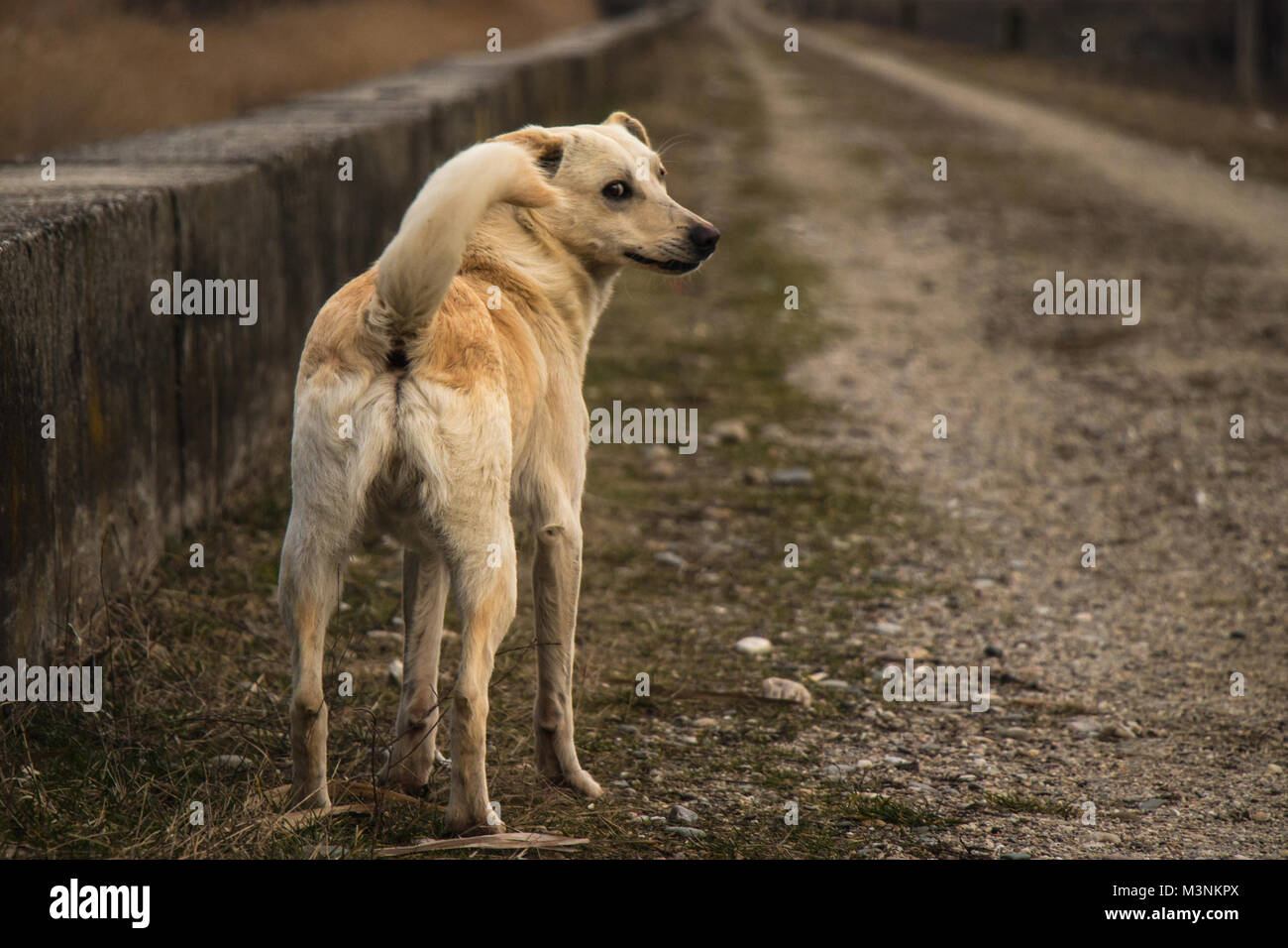 A young yellow dog back - Stock Image