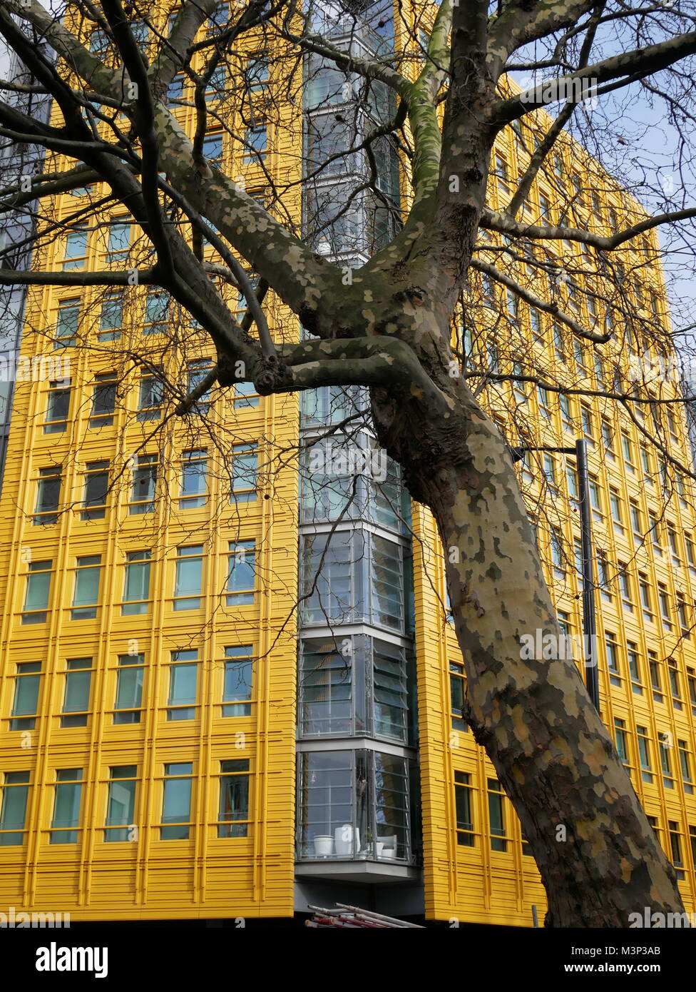 Yellow, corner office building and tree near Oxford Circus in London's West End. - Stock Image