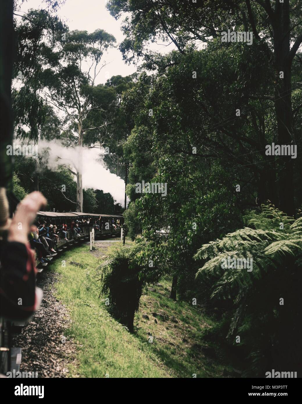 A view from the Puffing Billy train, the oldest railway in Australia - Stock Image