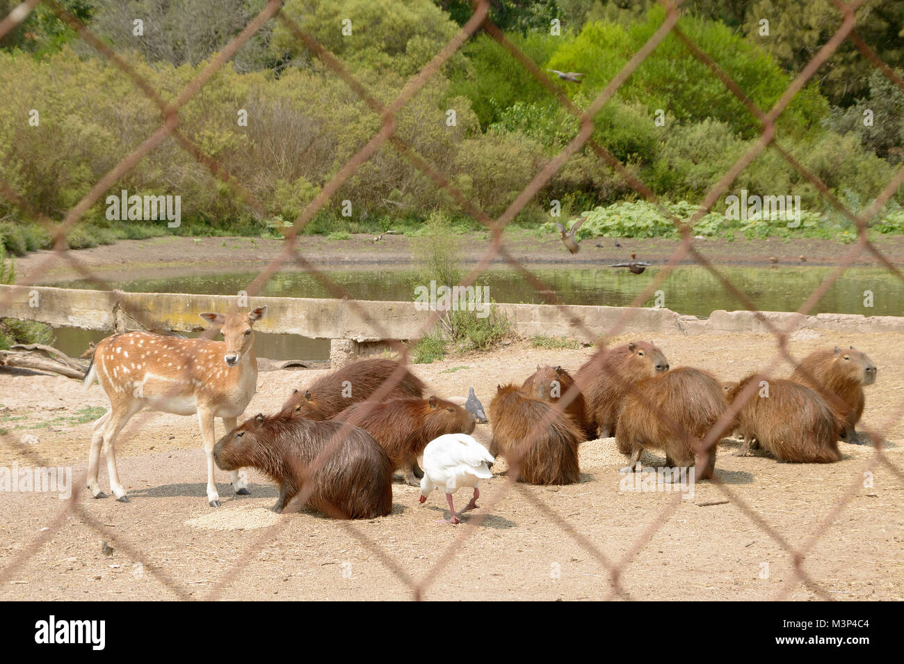 protected animals in the natural reserve, Montevideo Uruguay Stock Photo