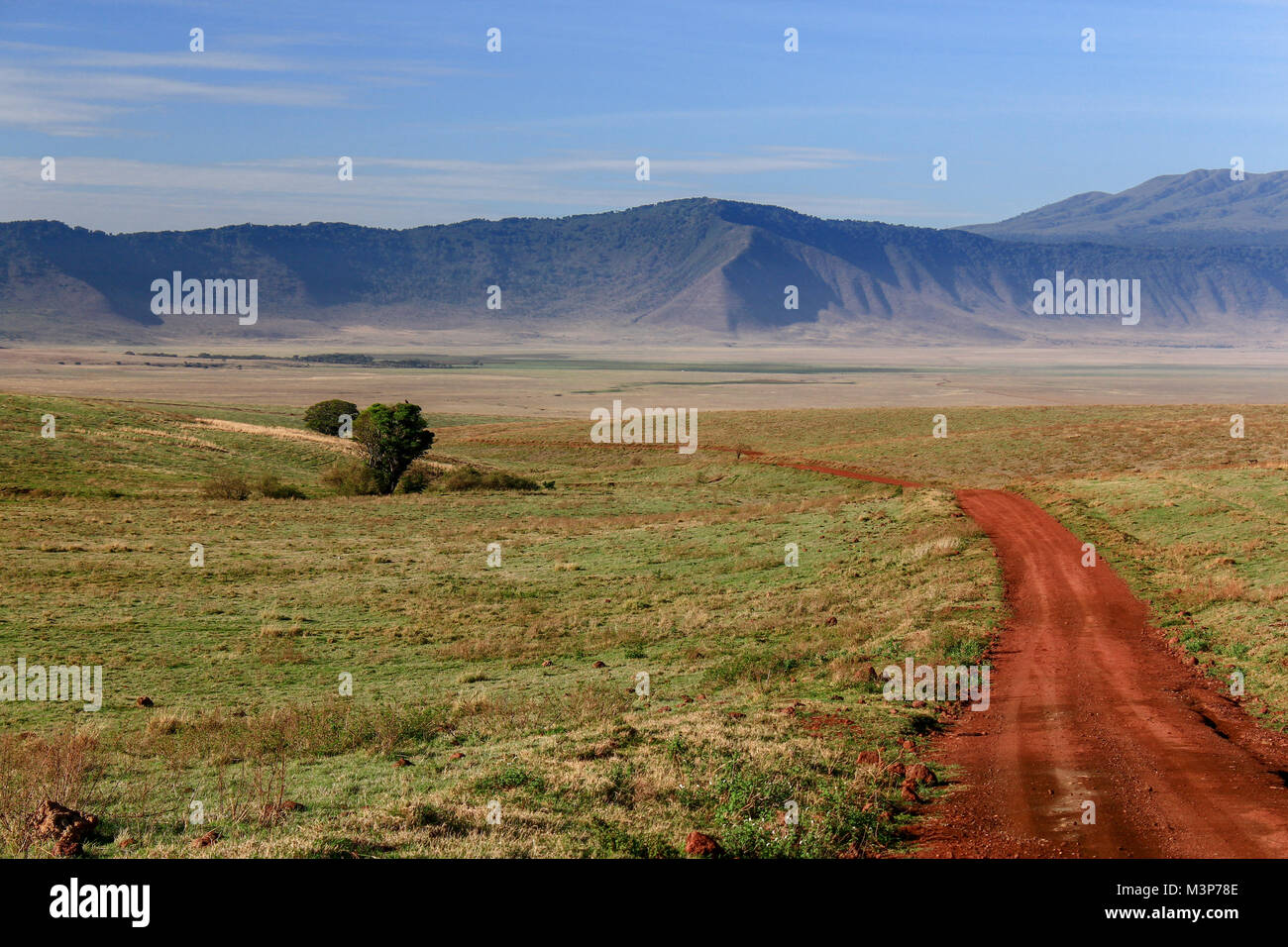 Dirt road between leading to  the grassland in Ngorongoro Crater, Tanzania - Stock Image