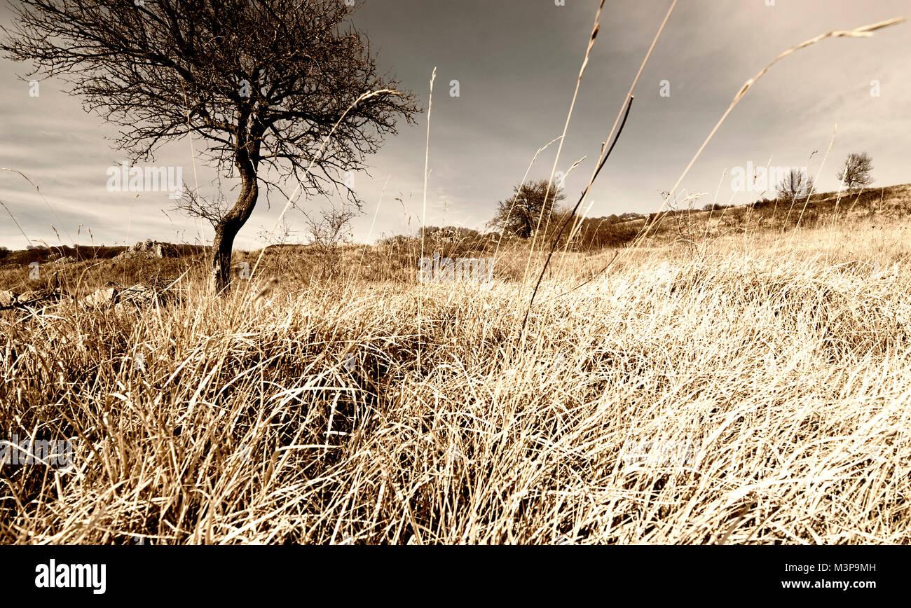 Lonley tree in mountain field, cornfield fallow wheat field. Stock Photo