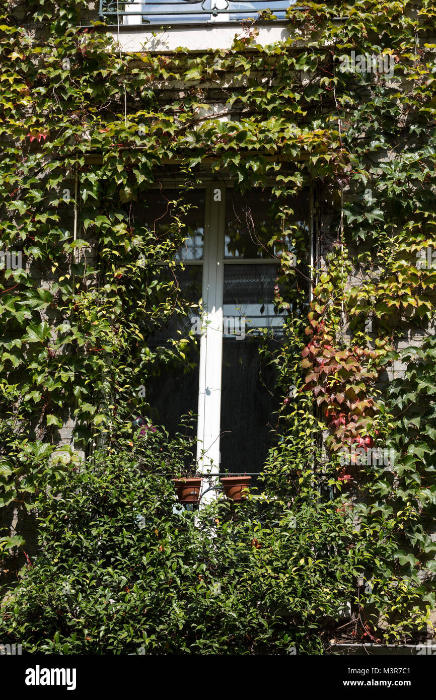 Paris - Old house covered by ivy in Montmartre. Stock Photo