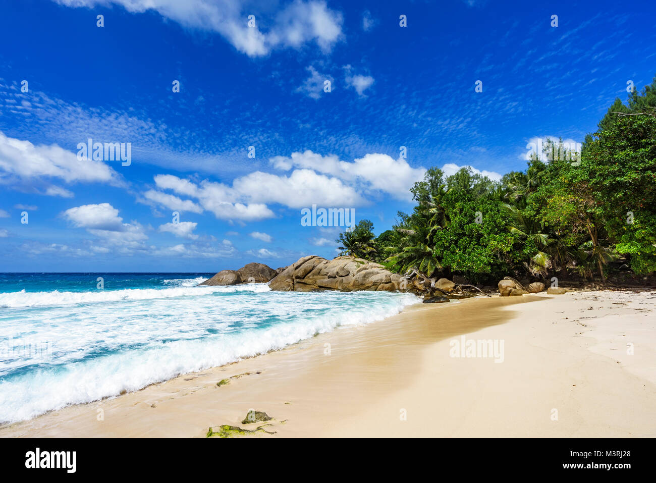 Beautiful paradise tropical beach with palm trees, white sand,granite rocks and turquoise water, police bay, mahé, - Stock Image