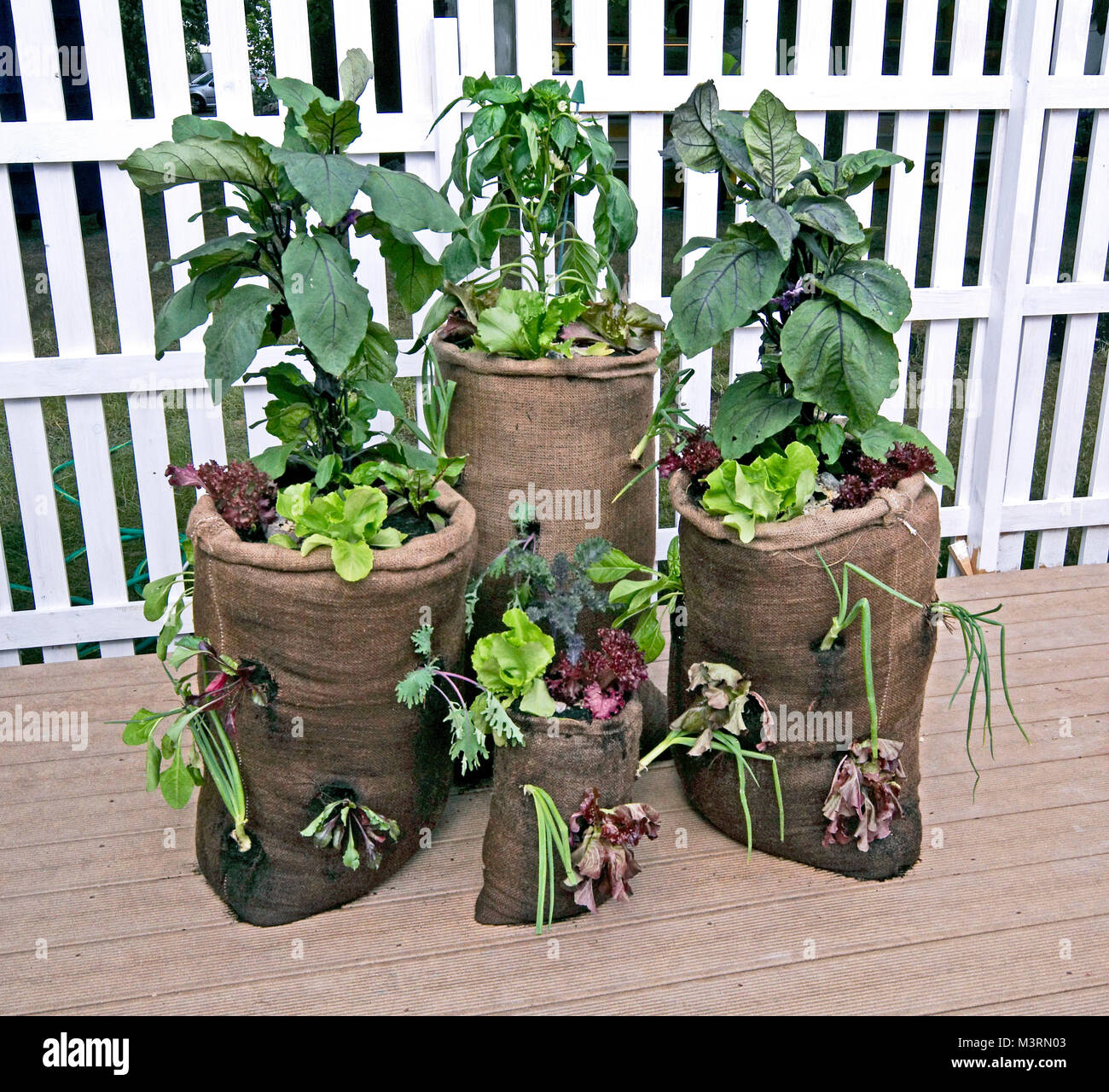 Concept gardening 'grow your own' and save the enviornment vegetables grown in sacks Stock Photo