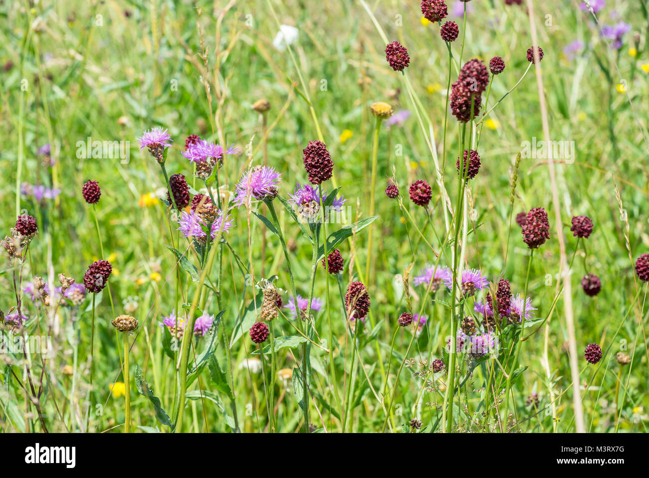sunny colorful closeup shot of dense wildflower vegetation at spring time Stock Photo