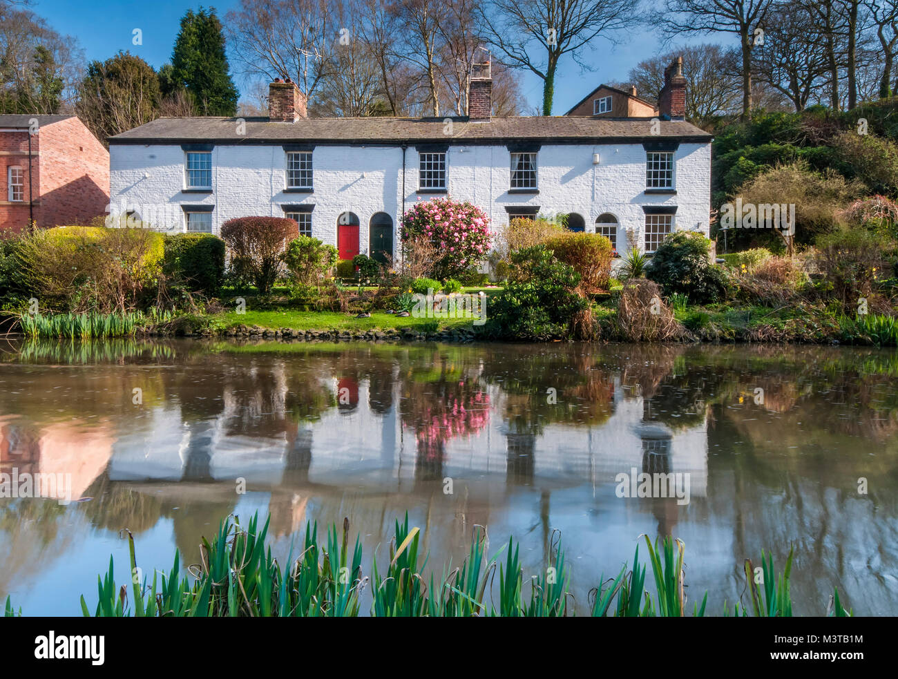 Beautiful White Cottages at The Dell, Lymm, Cheshire, England, UK - Stock Image
