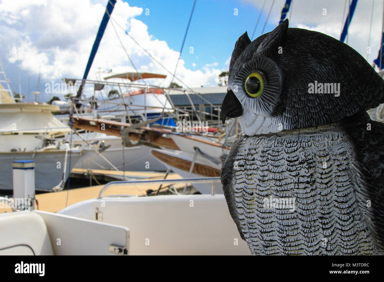 Owl deterrent at a marina, Queensland, Australia. Yachting, boating. - Stock Image