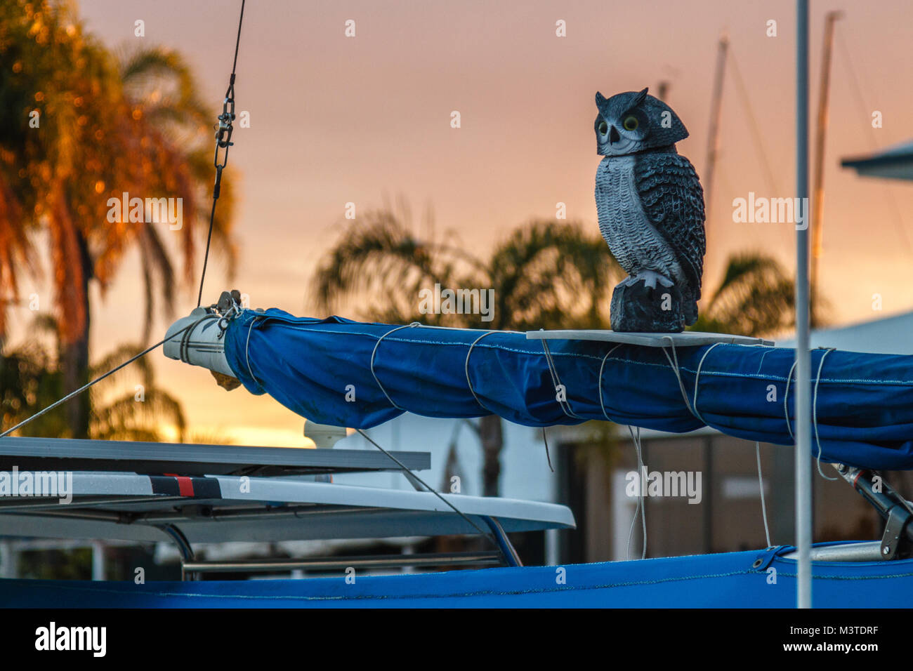 Owl deterrent at a marina at sunset, Queensland, Australia. Yachting, boating. - Stock Image