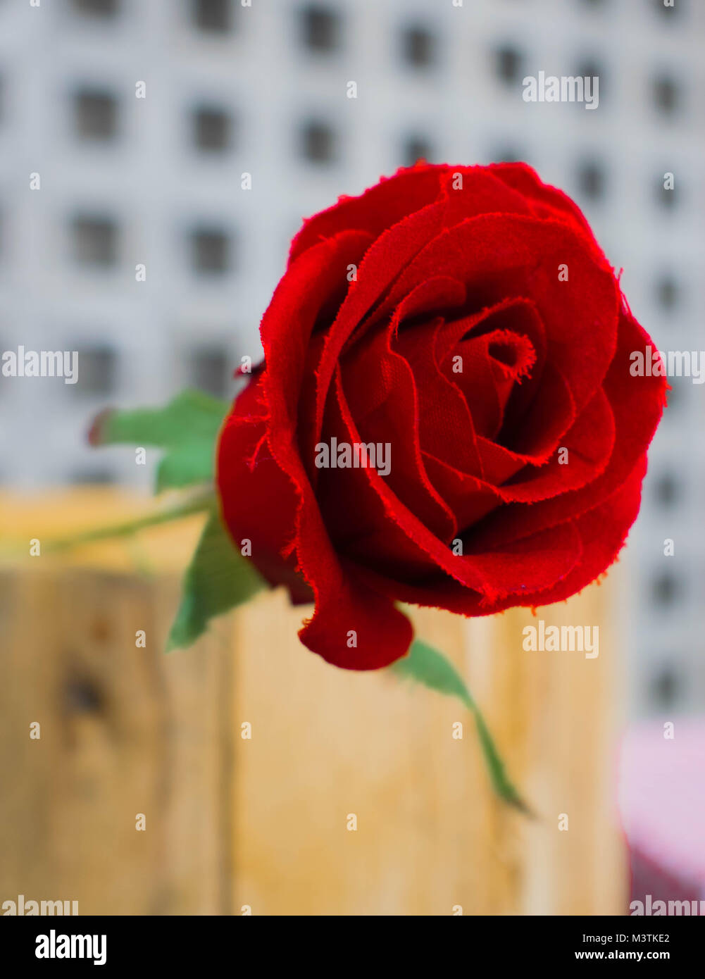 Picture of rose flower - Stock Image