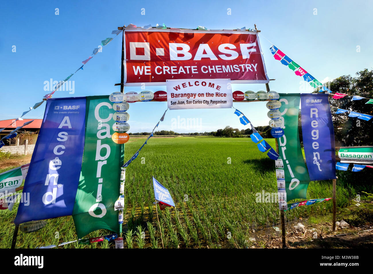 Flags of the chemical company BASF in a rice field in the Philippines (Pangasinan province) advertise for the chemical - Stock Image