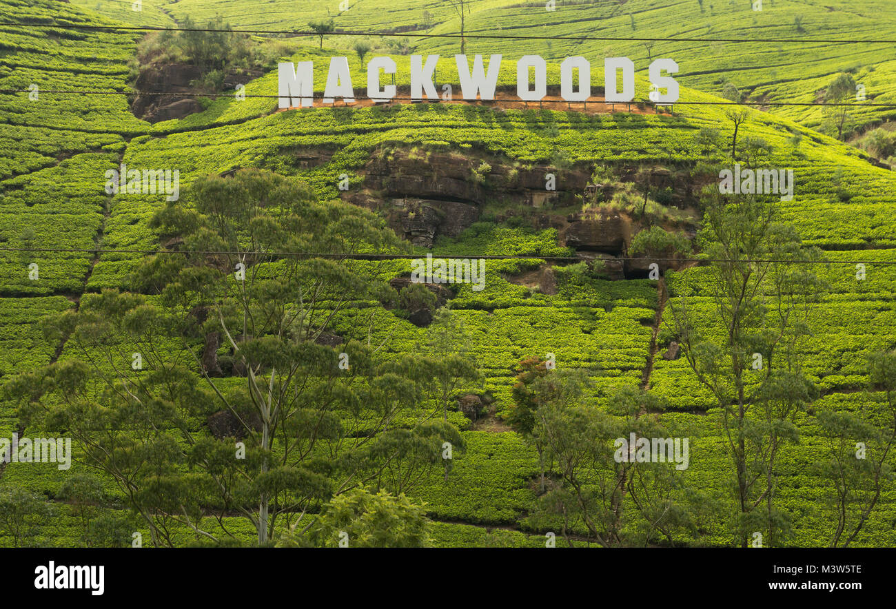 Sri Lanka - November 2013: Mackwoods sign on tea plantation in Sri Lanka - Stock Image