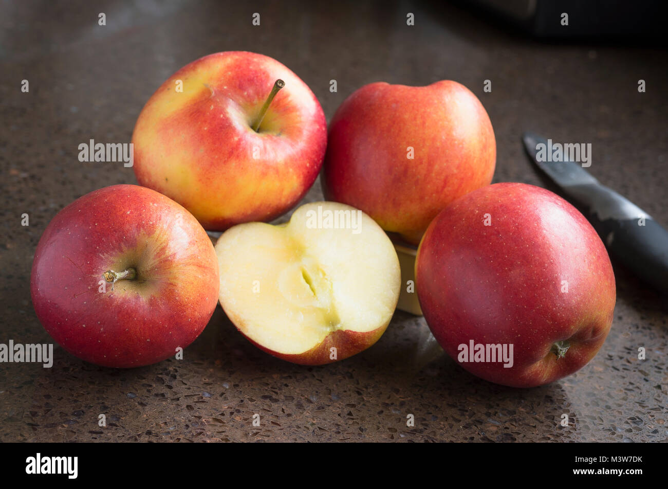 Jazz apples showing clean white flesh of these crisp and juicy eating apples in an English winter - Stock Image