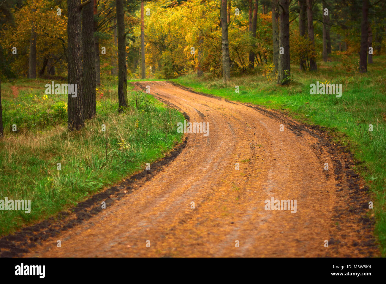 Pathway at Swedish countryside - Stock Image