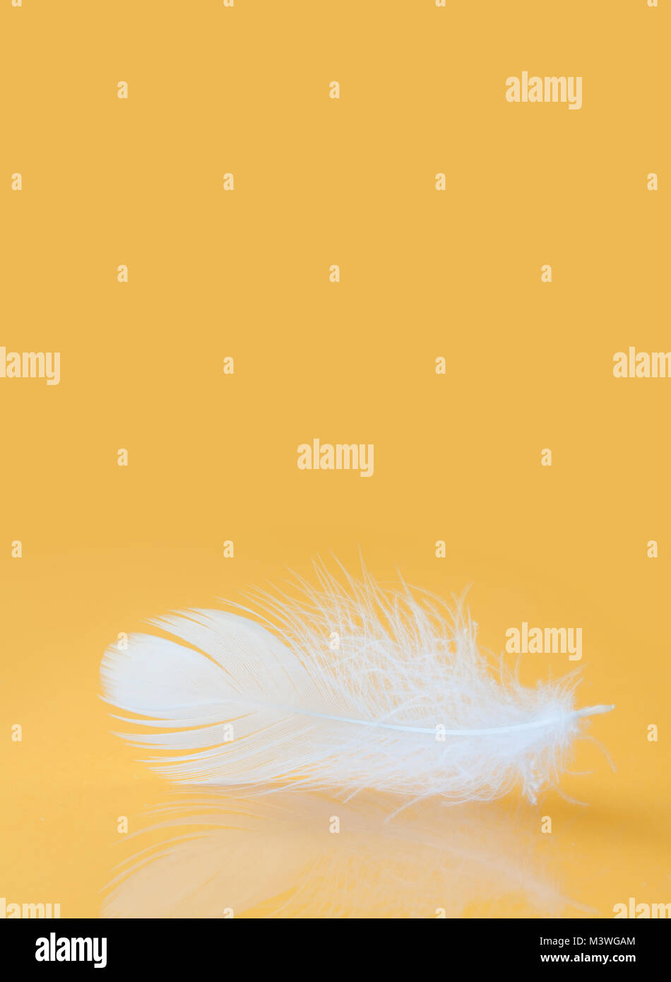 Fluffy white feather texture macro view. Luxury softness concept. Bird plumage feathering on yellow background. - Stock Image