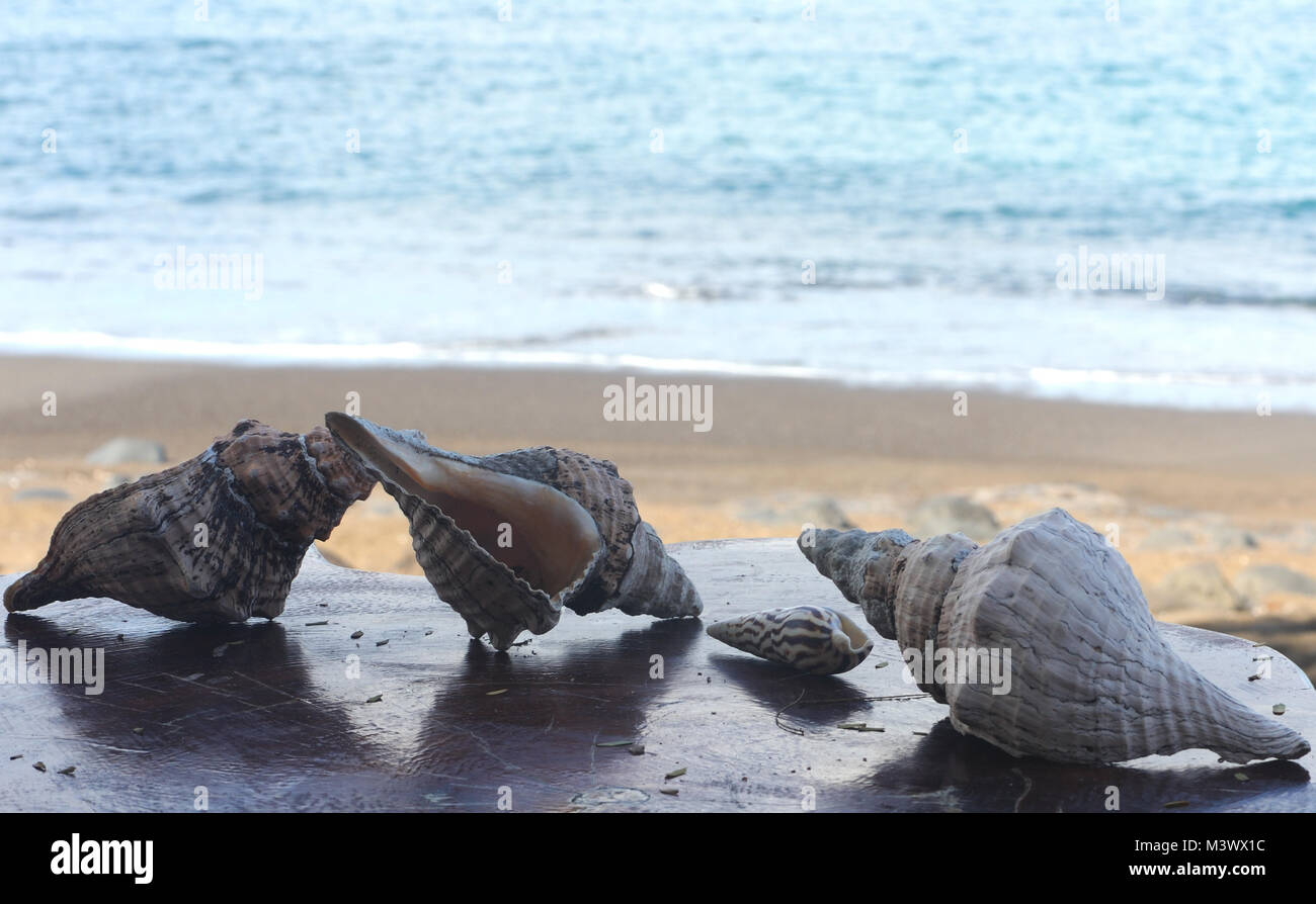 Seashells on a beach-side table illustrate the conservation rule to remove nothing from the islands. Floreana, Galapagos, - Stock Image