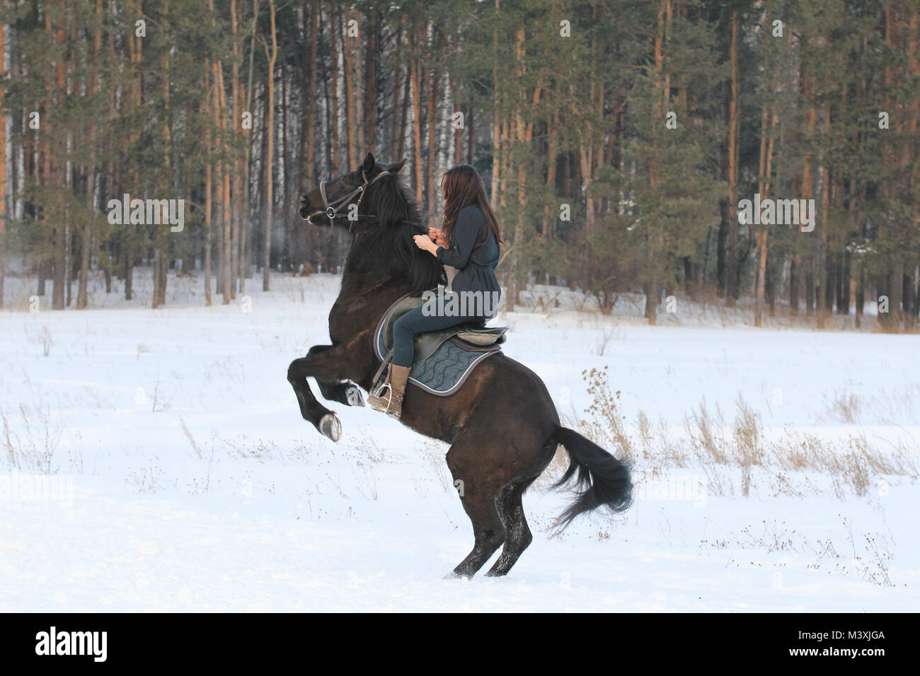 Young black haired woman on top a bay horse in winter forest - Stock Image