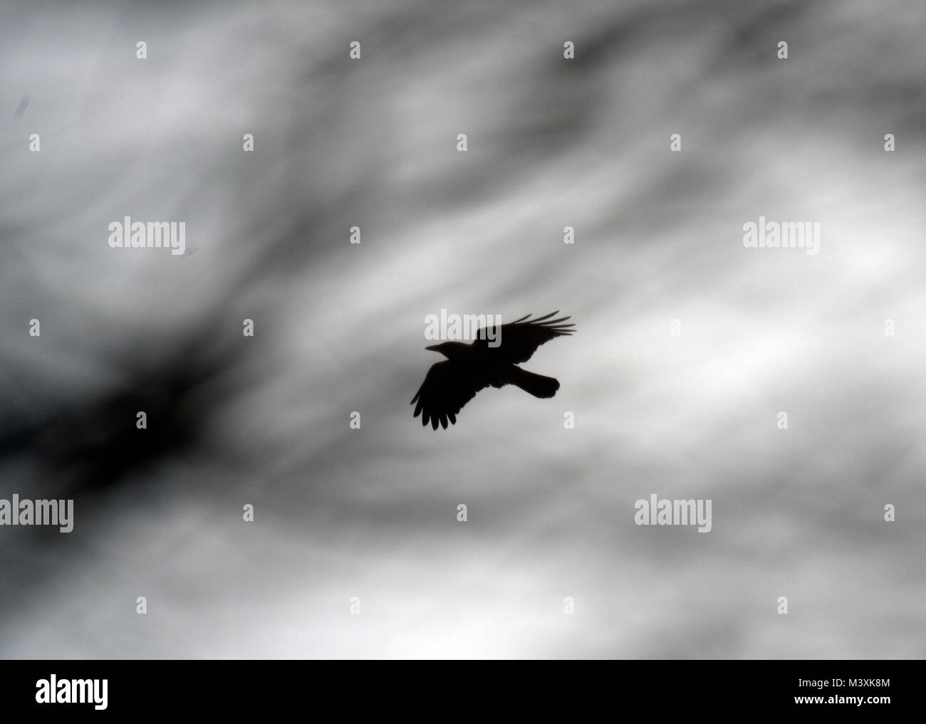 Crow in the Clouds - Stock Image