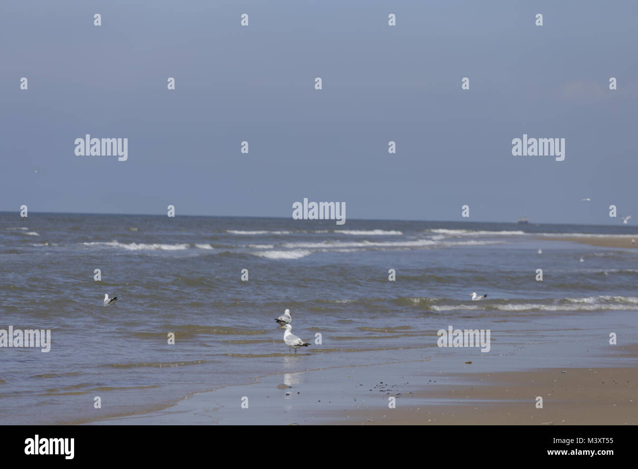 North Sea beach in the Netherlands - Stock Image