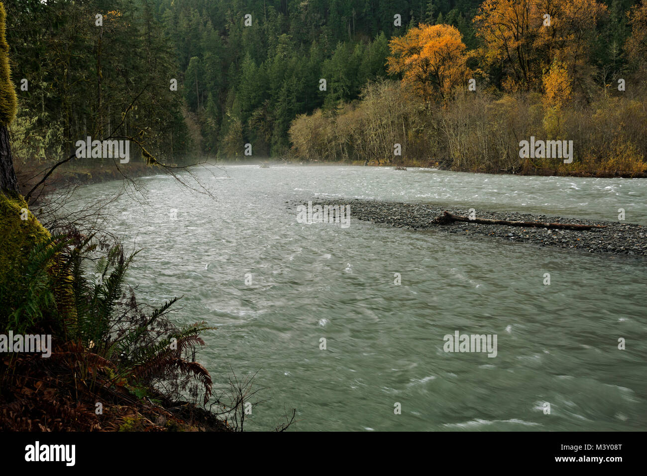 WA13369-00...WASHINGTON - The Elwah River finding its own channel after the removal of the Glines Dam in Olympic - Stock Image