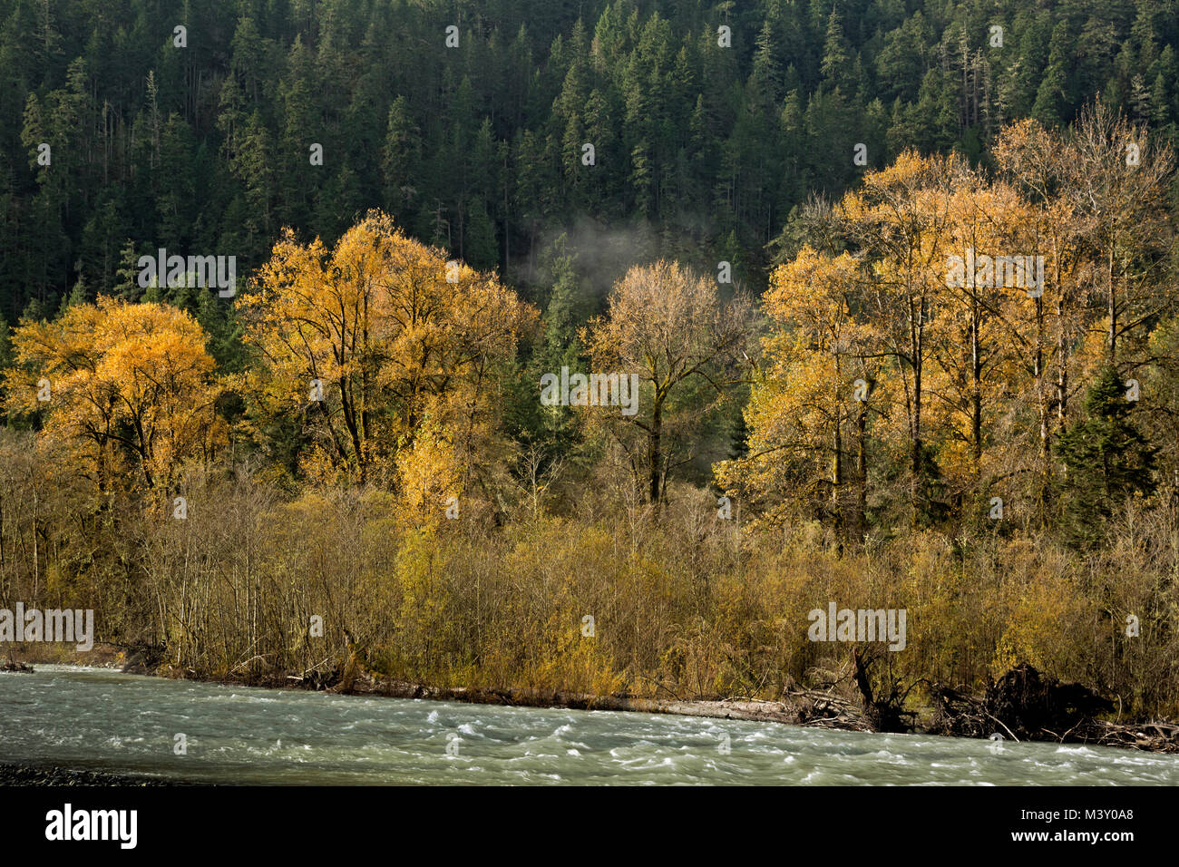 WA13371-00...WASHINGTON - Fall color along the banks of the Elwha River in Olympic National Park. - Stock Image