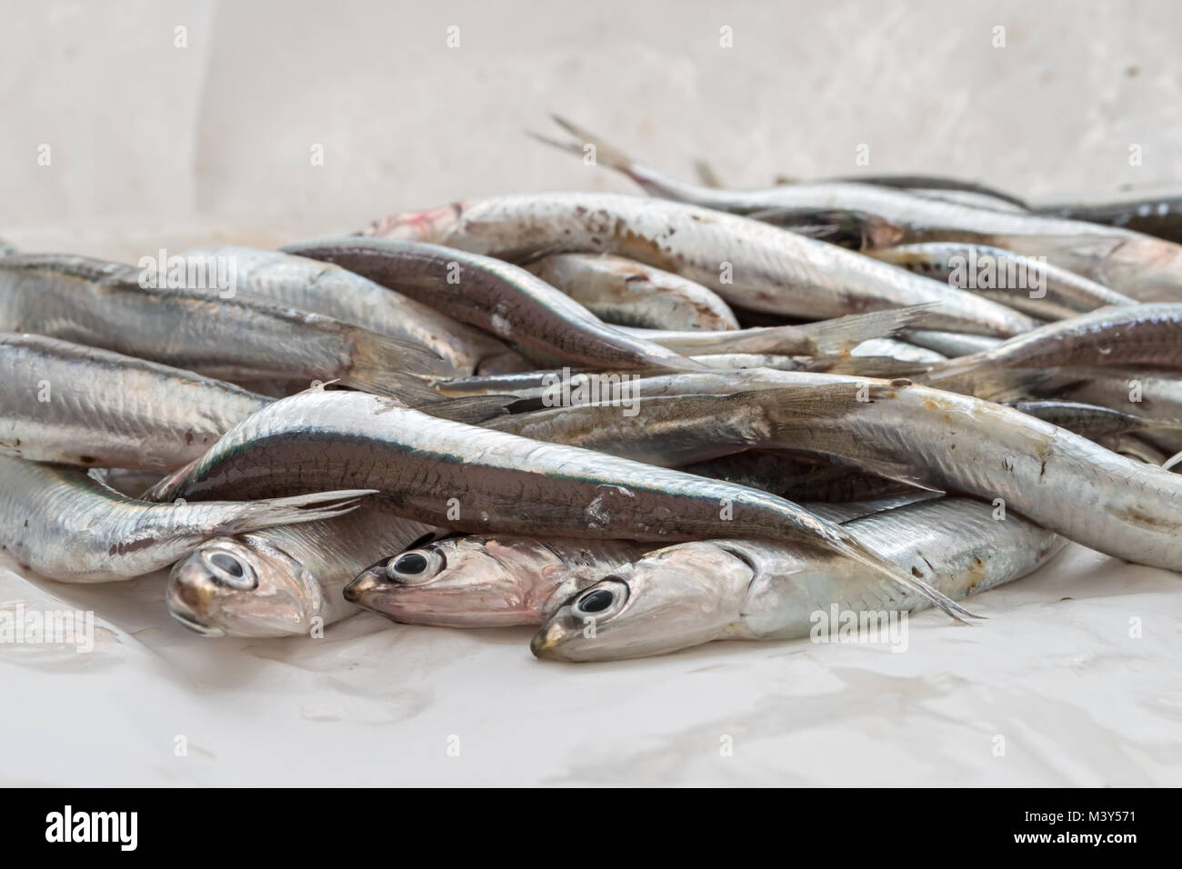 fresh anchovies in front 2 - Stock Image