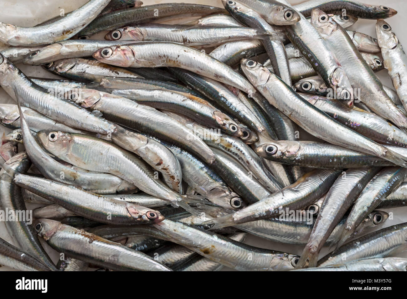 fresh anchovies from above 3 - Stock Image