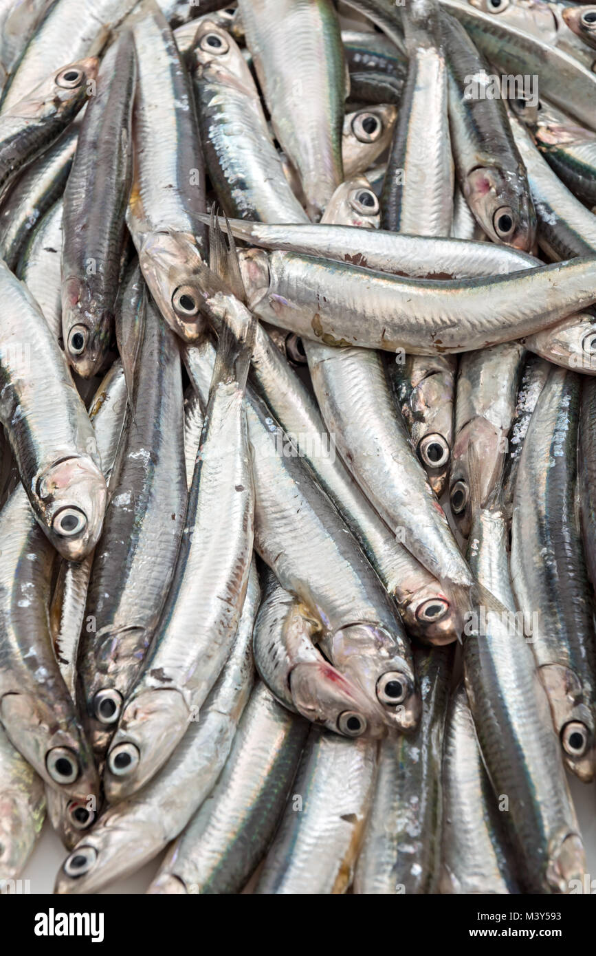 fresh anchovies from above 7 - Stock Image