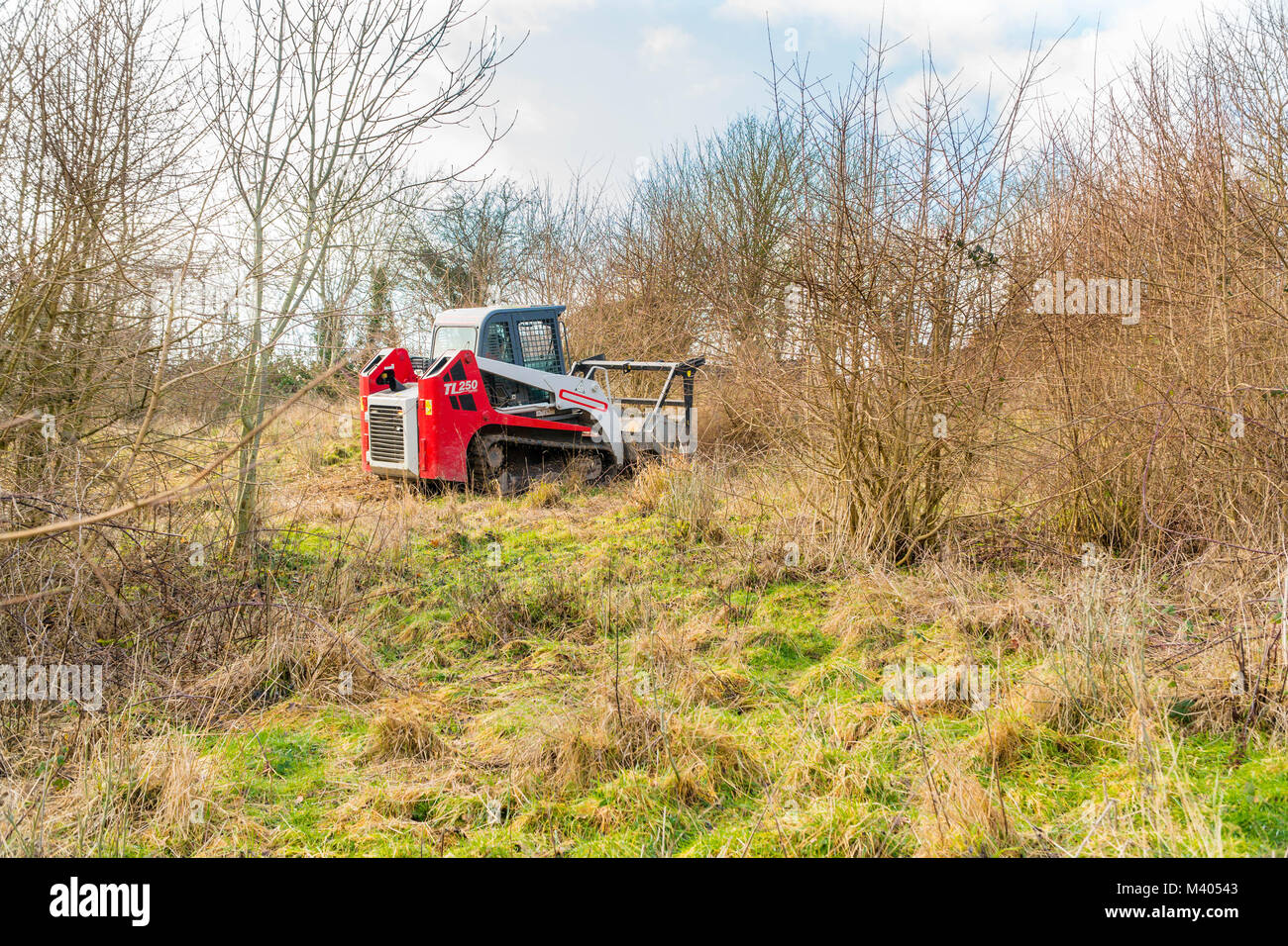 Brush cutter making short work of cutting back bramble and invasive