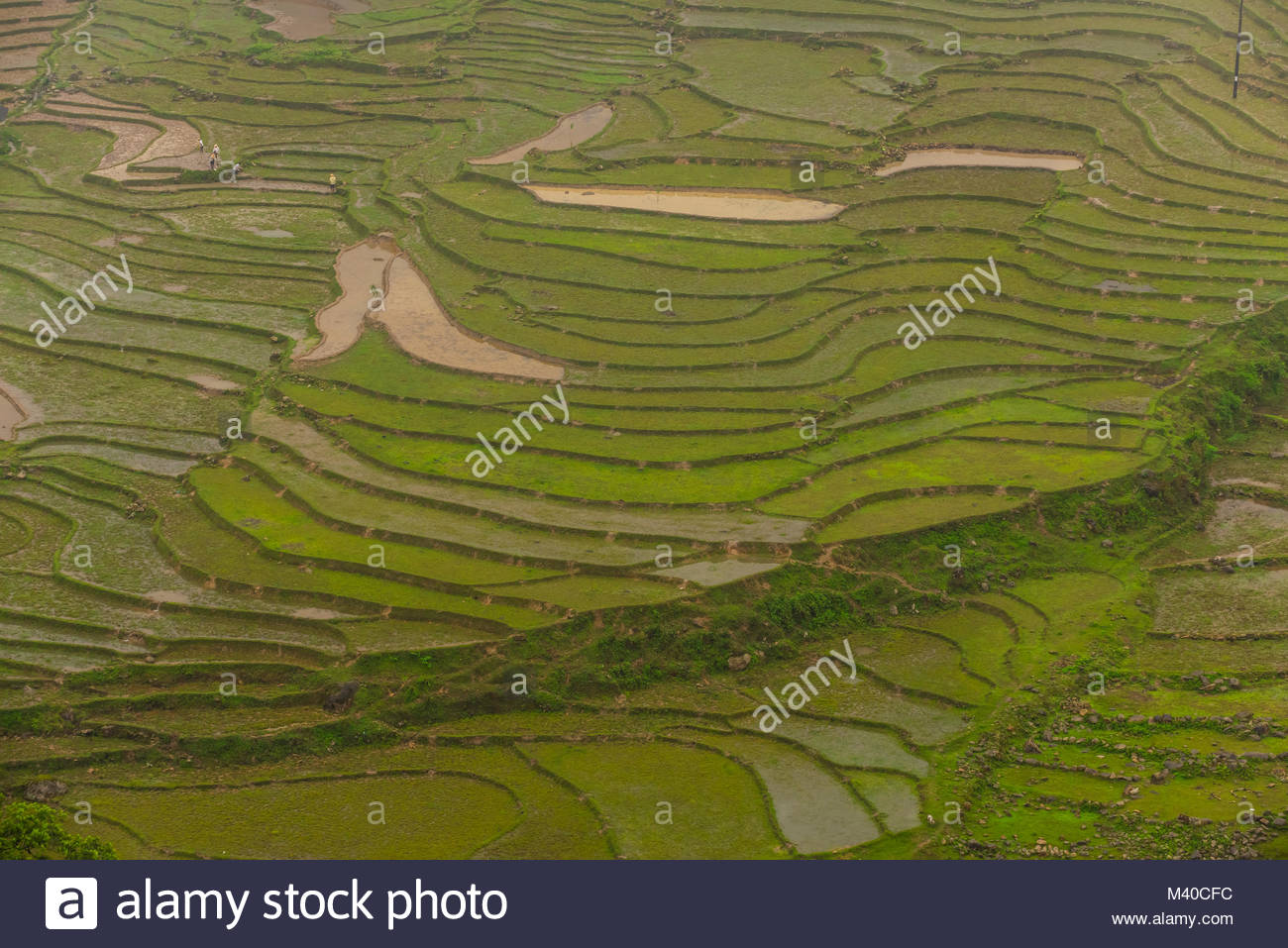Rice terraces in the fog, Muong Hoa Valley, near Sapa, northern Vietnam. - Stock Image