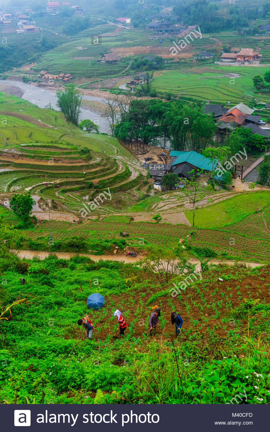 Farming, Muong Hoa Valley, near Sapa, northern Vietnam. Stock Photo