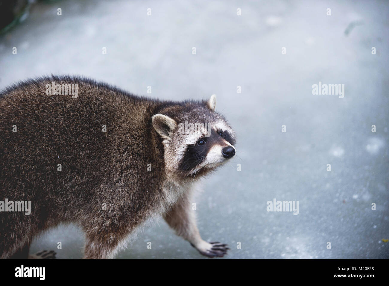 Low depth of field, Sharp Eyes, Blurred Background - Stock Image