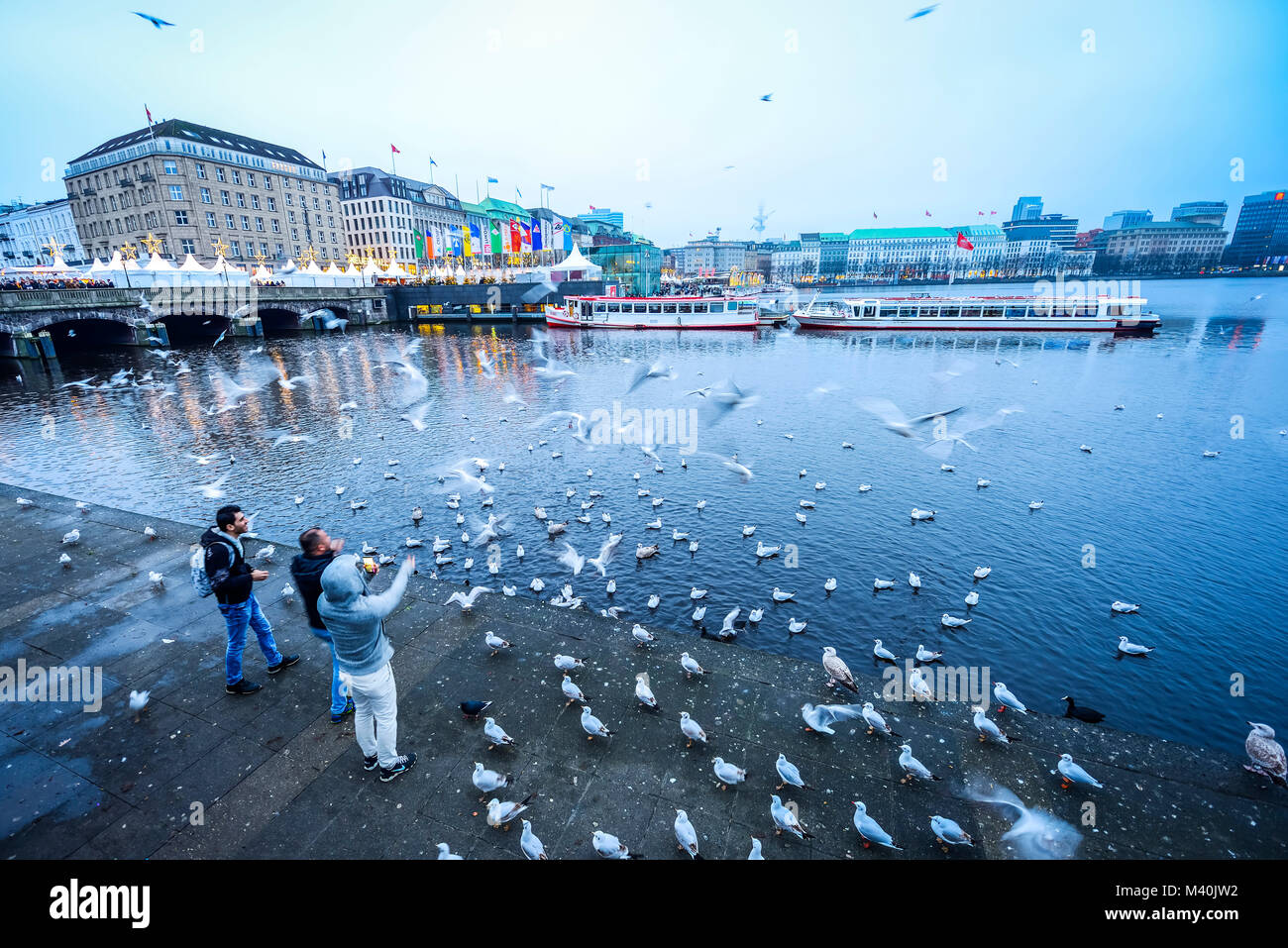 Seagulls feeding on the Inner Alster Lake in Hamburg, Germany, Europe, Möwen füttern an der Binnenalster in Hamburg, Stock Photo