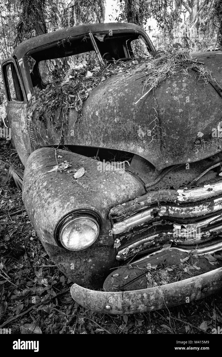 Old rusted Chevy truck in the woods, found in Micanopy, Florida - Stock Image