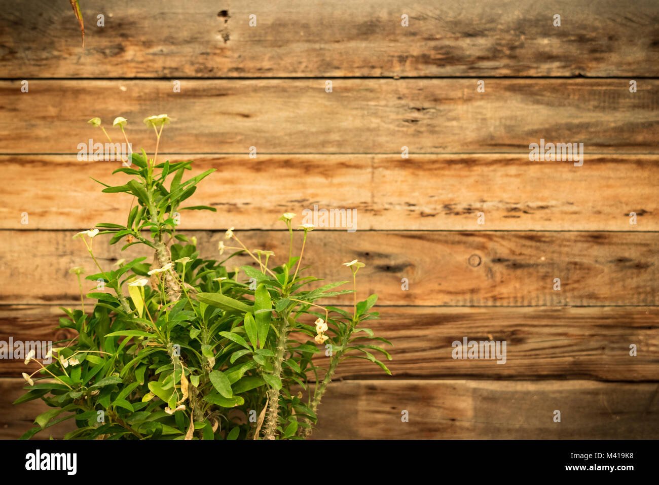 Thorny Plant Wooden Background For Caption Or Title Homey Rustic Traditional Theme