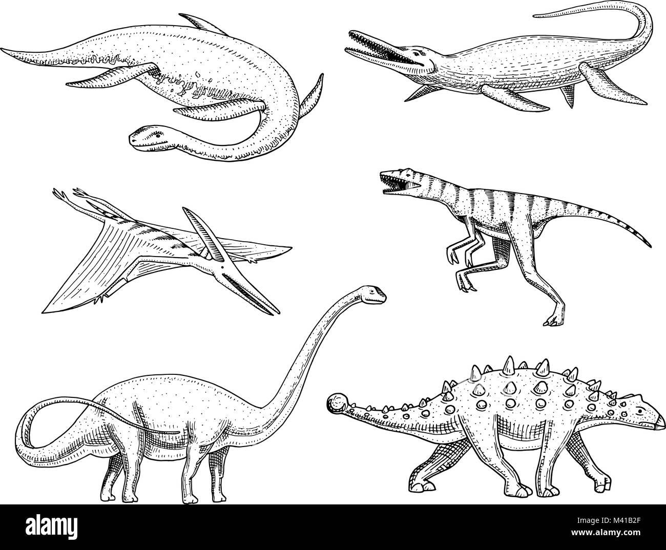 mosasaurus stock photos  mosasaurus stock images  alamy