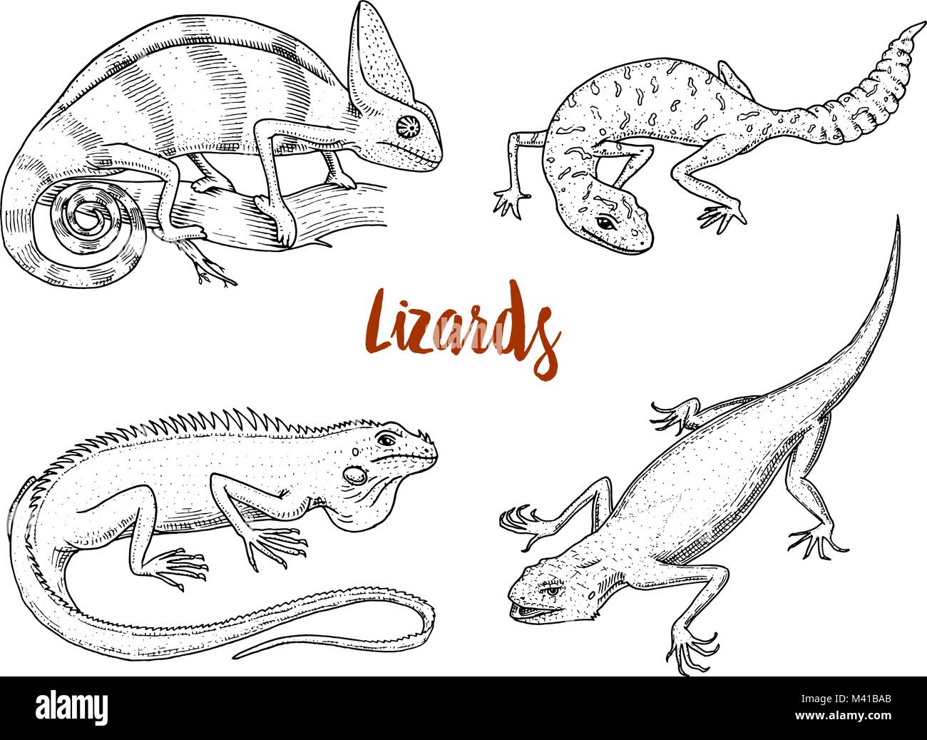 Chameleon Lizard, American green iguana, reptiles or snakes or spotted fat-tailed gecko. herbivorous species. vector - Stock Image