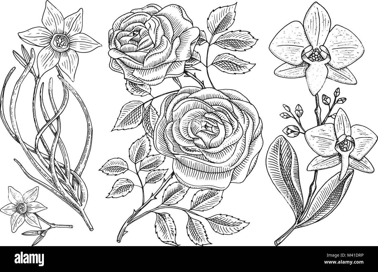 Flowers set, roses with leaves and buds and daffodil and orchid. Wedding botanical garden or plant. Vector illustration. Stock Vector