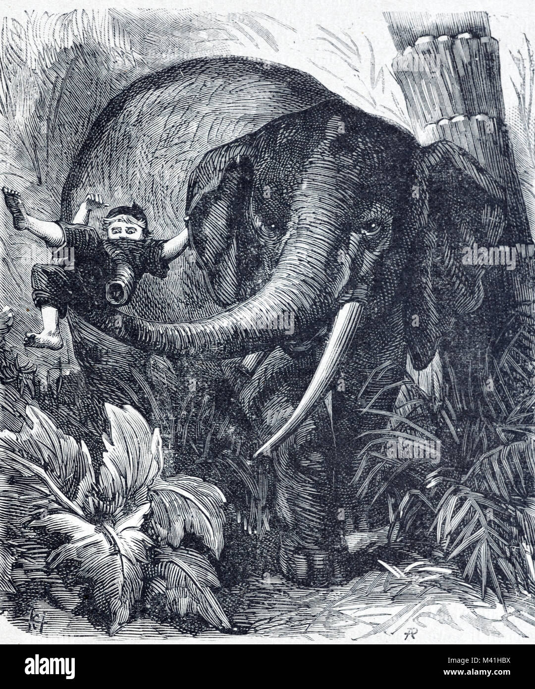 African Forest Elephant, Loxodonta cyclotis, Attacking Child