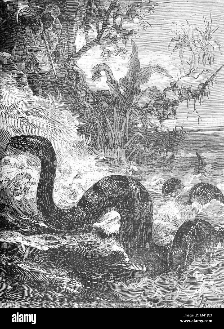 Giant Python, Snake or Lake Monster in Lake Fetzara Algeria (Engraving 1879) - Stock Image