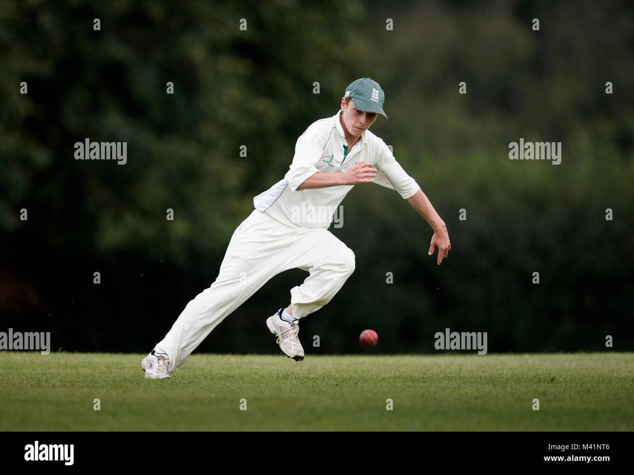 Cricket, fielder in action. - Stock Image