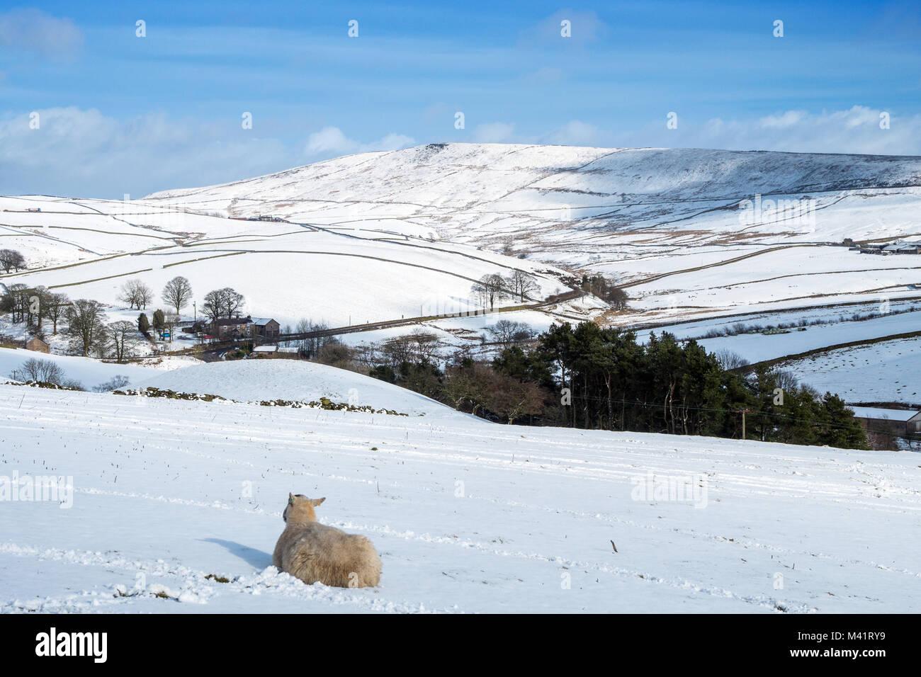 Shining Tor, winter, Peak District National Park,UK - Stock Image