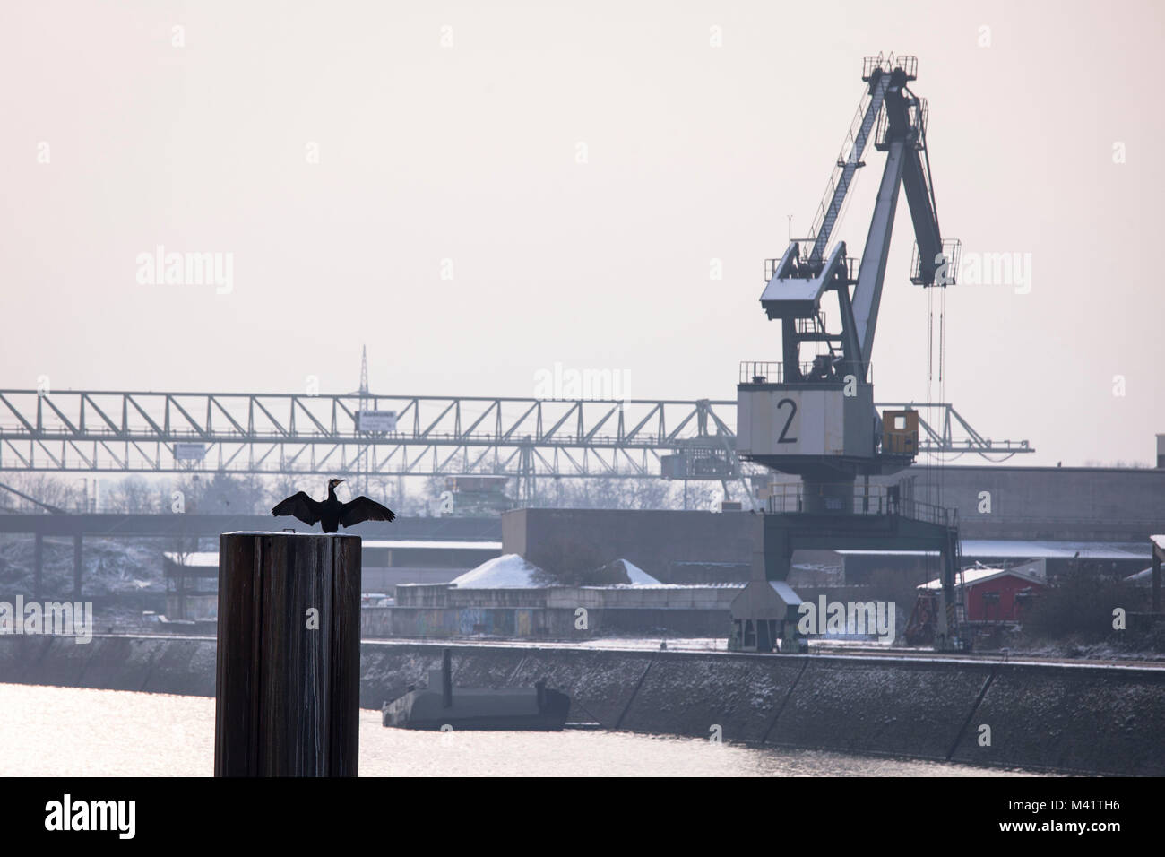 Europe, Germany, Cologne, crane in the Rhine harbor in the district Deutz, cormorant  Europa, Deutschland, Koeln, - Stock Image