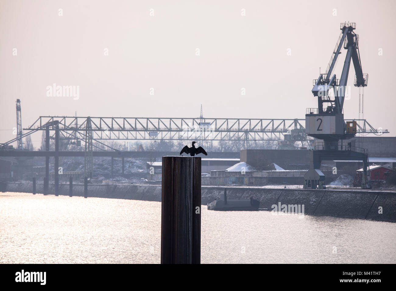 Europe, Germany, Cologne, crane in the Rhine harbor in the district Deutz, cormorant  Europa, Deutschland, Koeln, - Stock Image
