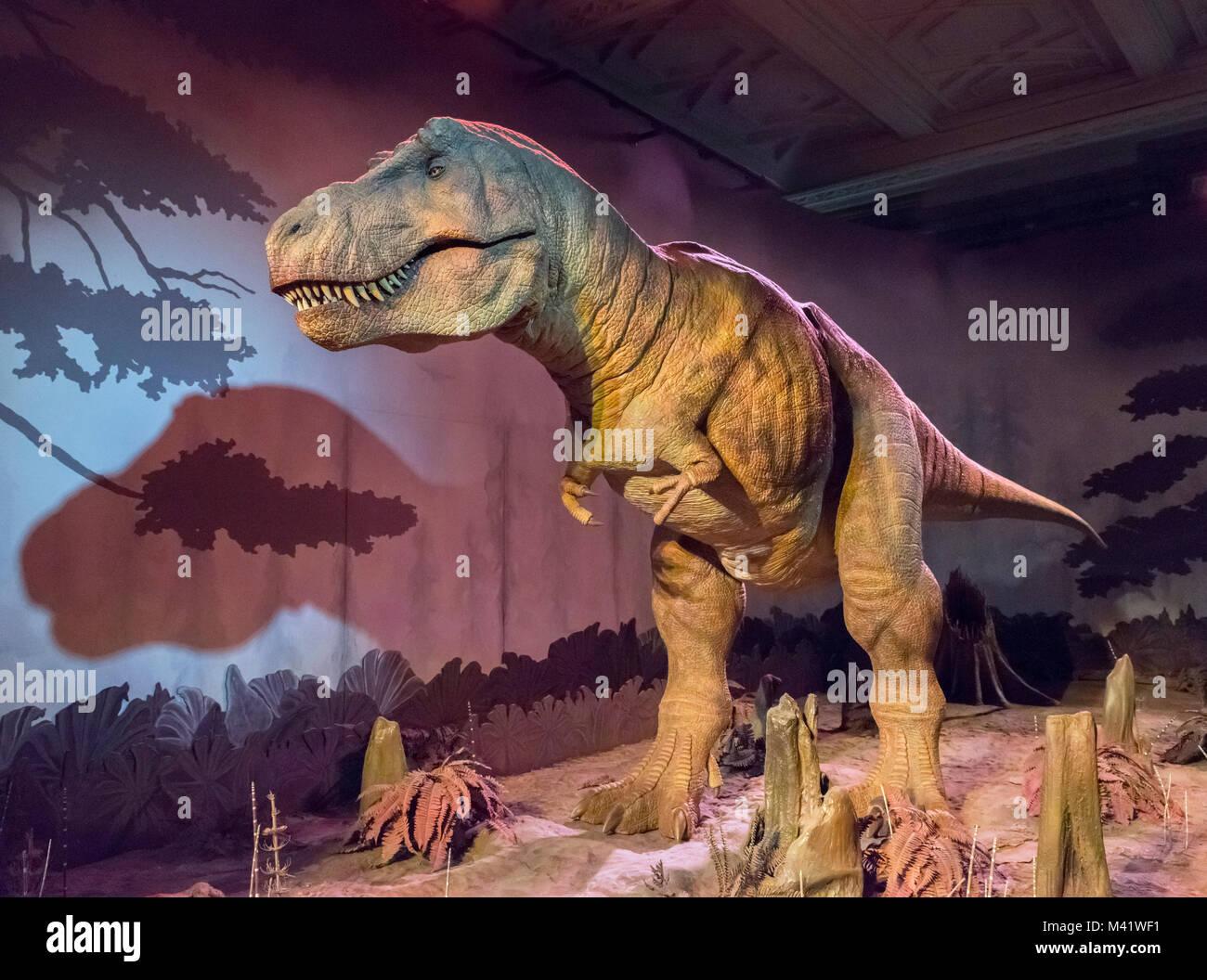 Tyrannosaurus rex. Animatronic T.Rex in the Dinosaurs Gallery, Natural History Museum, London. - Stock Image
