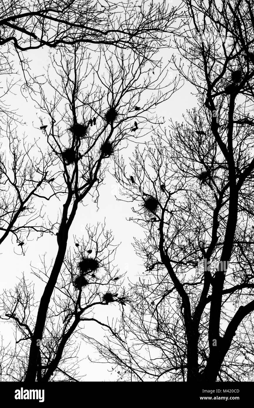 A black and white picture from the city park when the darkness comes. The silhouettes of the trees are only visible - Stock Image