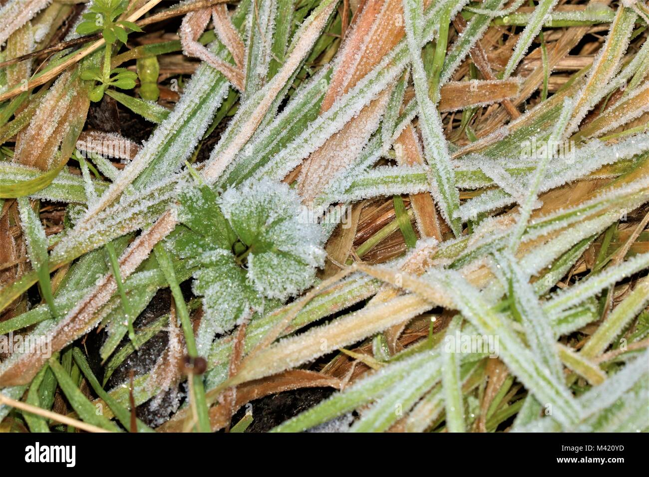 Grass covered in frost on a winter's morning - Stock Image